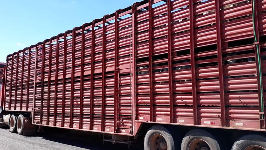 No total, seis carretas de dois andares foram utilizadas no roubo de gado (Fonte: Divulgação Polícia Militar)